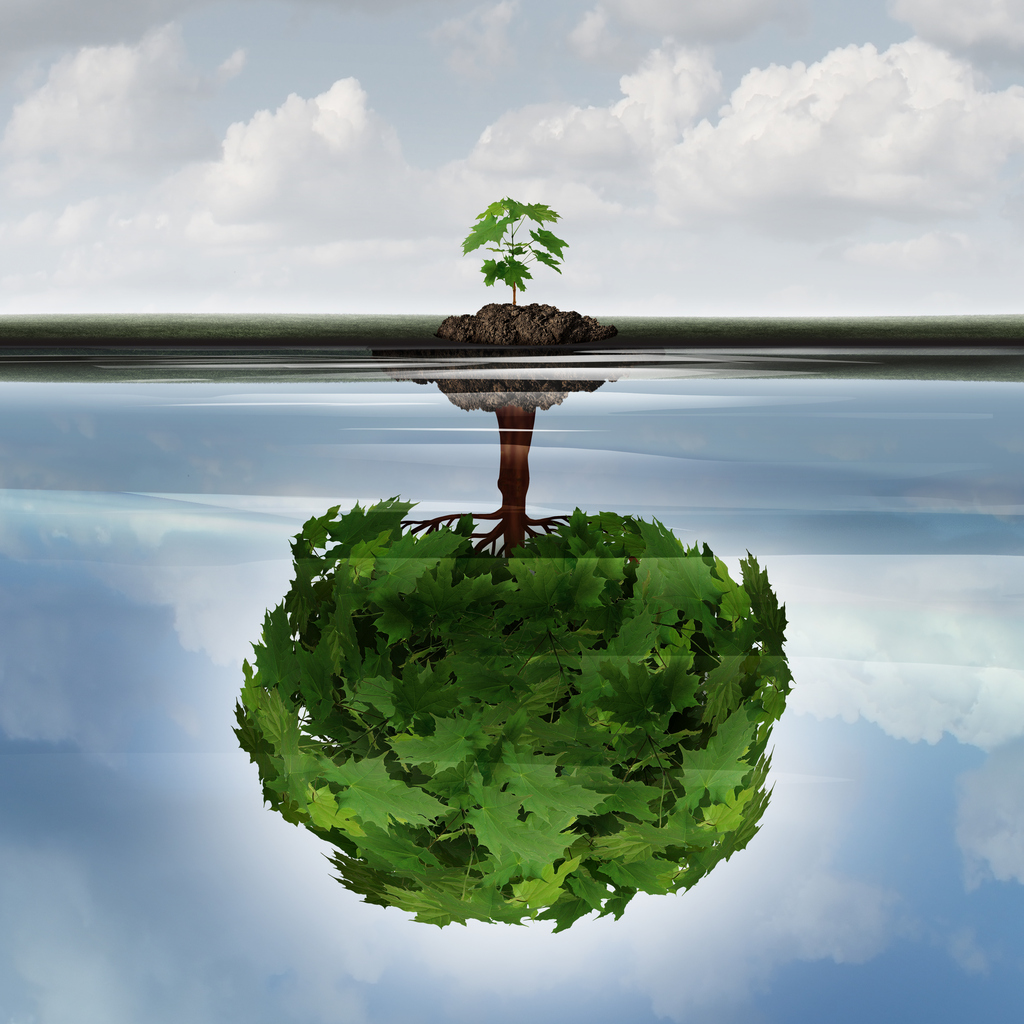 Potential success concept as a symbol for aspiration. A small sapling making a reflection of a mature large tree in the water.
