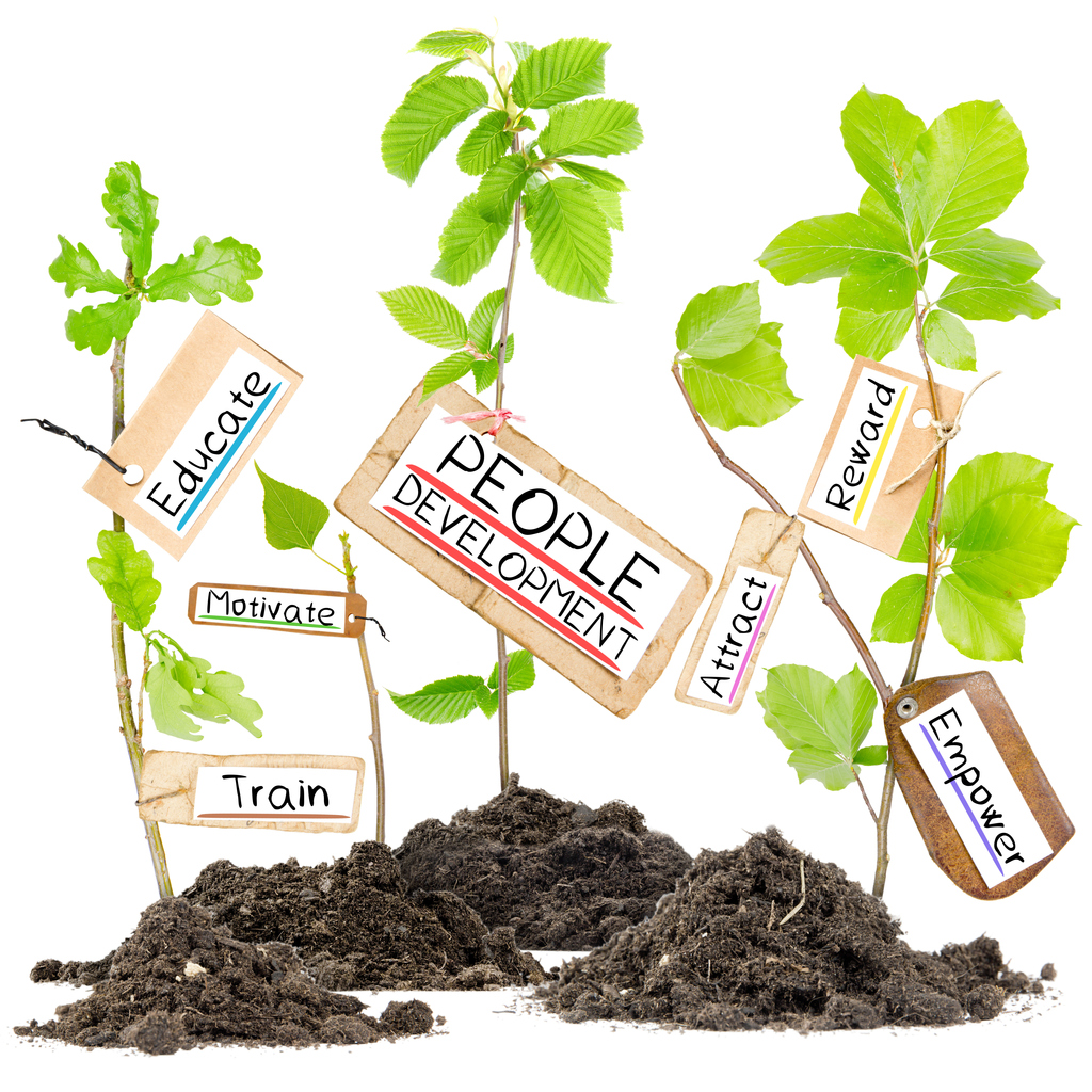 Photo of plants growing from soil heaps with PEOPLE DEVELOPMENT conceptual words written on paper cards